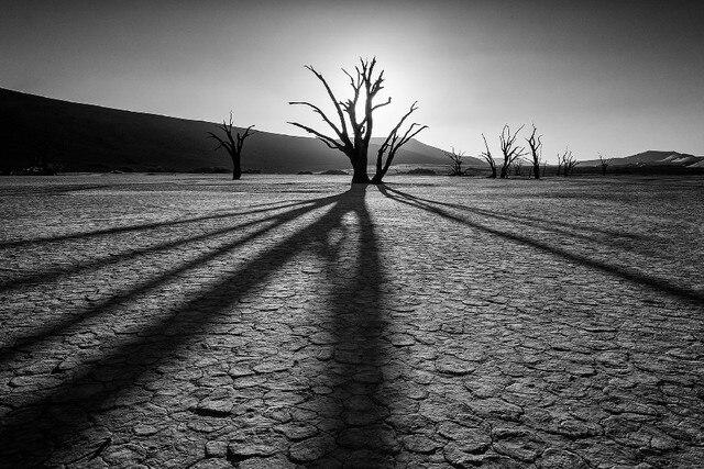 Populaire DIY cadre désert roches plantes la sécheresse paysage Affiche  XW77