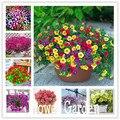 24 tipo colgando semillas de petunia, Petunia del jardín, Semillas de la Petunia, color mezclado-200 semillas/porción, # 064HDU