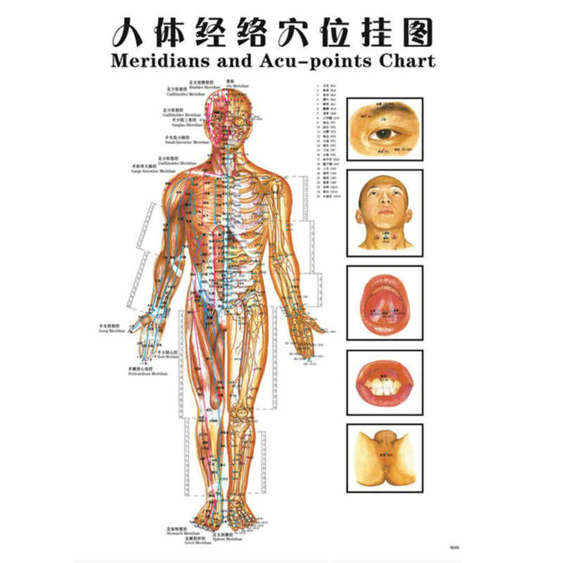 1Pcs/Set English Hand&Foot&Ear&Body Meridian Points Of Human Wall Chart Female /Male Acupuncture Massage Point Map Flipchart