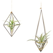 Wall Freestanding Hanging Tillandsia Air Plants Rack Rustic Metal Iron Wrought Geometric Plant Holder Z