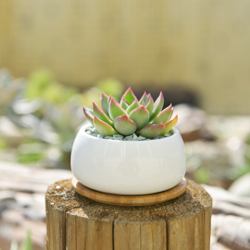 Set Of Decorative Round White White Ceramic Succulent Plant Pot Porcelain Flower Pot Zakka Home Decor