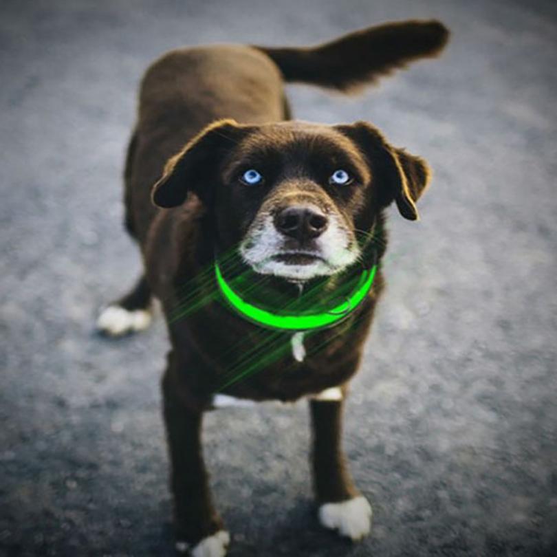 Transer 7 colors LED Nylon Dog Pet Security Night Necklace Anti-lost Flashing Glitter Collars Dog Size S~XL 17Dec26