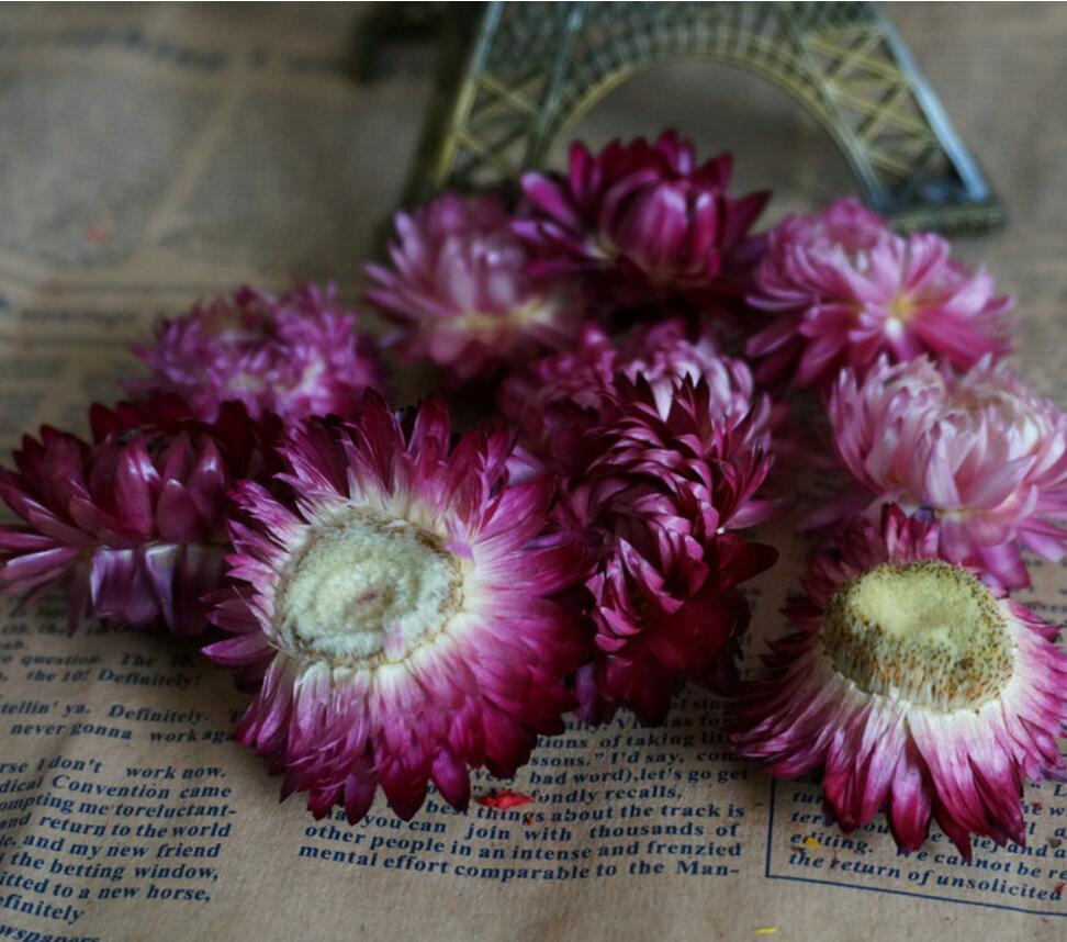 50pcs preserved yellowpurple daisy flowers for craft gift material 50pcs preserved yellowpurple daisy flowers for craft gift material accessory decoration in artificial dried flowers from home garden on aliexpress izmirmasajfo