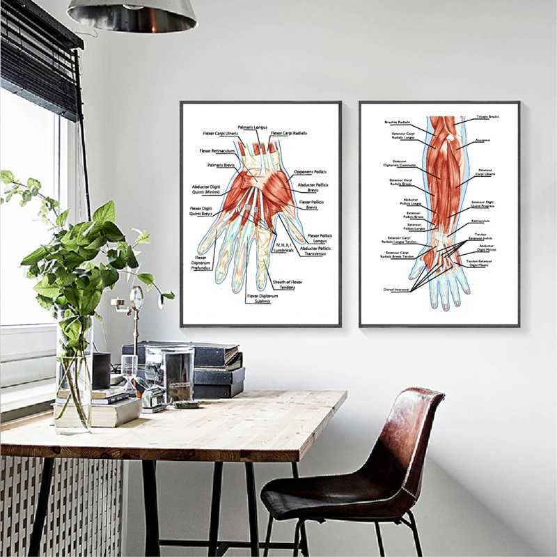 Human Muscular System Anatomy Poster Hand Palm Muscle Education Biological Board Prints Doctor Office Wall Decor Canvas Painting