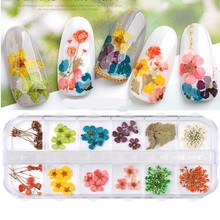 1 Case Dry Flowers Daisy Nail Decal Gypsophila Leaf Natural Dried Petal Nail Art Decor Real Flora Gel Nail Polish Manicure Tools mapplethorpe flora the complete flowers