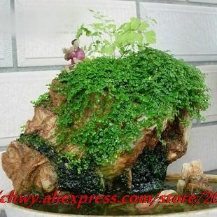 envo gratis mezcla de diversas semillas de rocalla subir la tradicin de plantas verde fresco natural