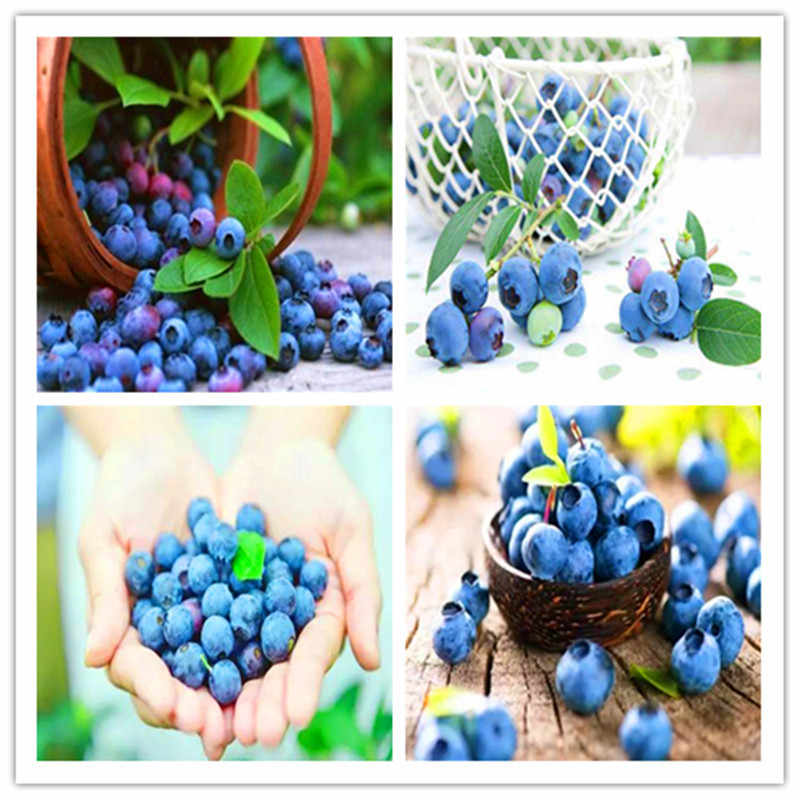 200 pcs BlueBerry Bonsai  Fruit Tree Highbush Blueberries DIY Countyard Bonsai plants for home & garden easy to grow