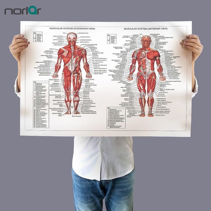 Leinwand Malerei Wandkunst Bild Menschlichen Anatomie Muskeln System ...