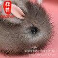 Hot Sell Adorable Plush Bunny Rex Rabbit Fur Phone Car Pendant Handbag Girl Key Chain Ring Pom Jewelry Good Friends Gift