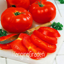 Time-Limit!!Big Beef Hybrid Tomato Seeds, 100 Seeds / Lot, Extra-large, Extra-meaty, Extra-tasty Tomato,#CJ7SK3