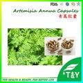 Artemisinina orgânicos Artemisia Annua Extrato Em Pó com preço do competidor 500 mg * 700 pcs