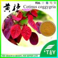 Natural fisetin extract / fisetin extract powder / cotinus coggygria extract