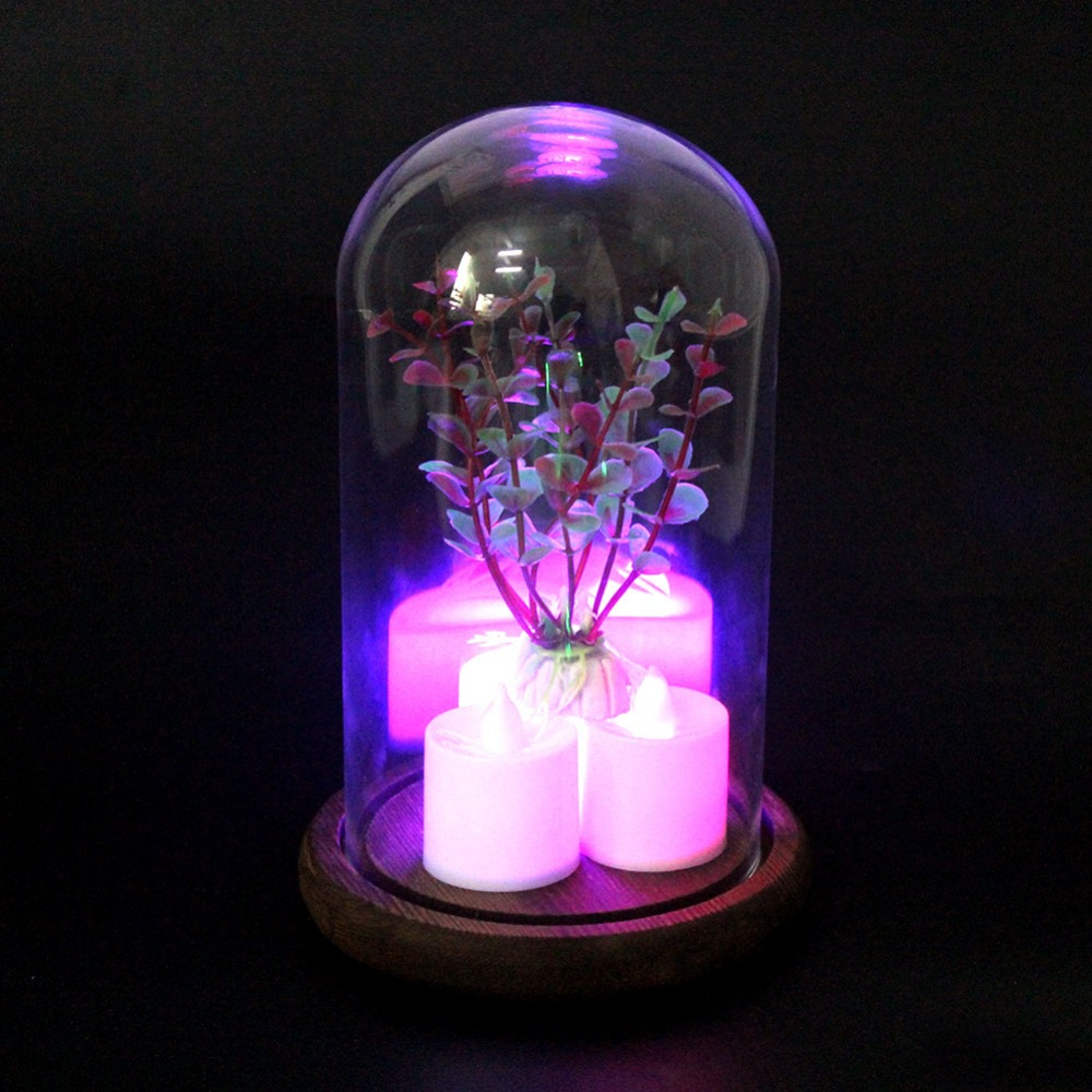 OurWarm Clear Glass Dome Night Light Bell Jar Display Wooden Base Flower Photo Party Favors  Holiday DIY Decoration