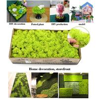 500g DIY Immortal Preserved Moss 24 Color Natural Real Moss Decorative Plant Wall Flower for Home Garden Party Wedding Decor