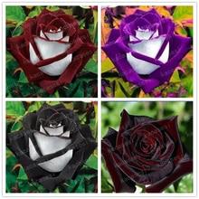 100 Pcs/bag Rare Rose Bonsai Black Flower With Red Edge Flowers For Garden Planting