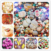 Hot product 100 rare mixed Lithops bonsai,original garden in bulk planting, indoor cute succulent bonsai plants free shipping(China)