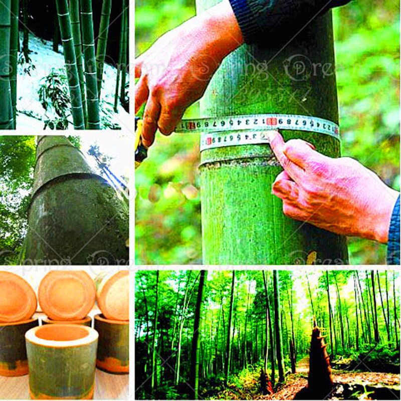 40 pz/borsa di Bambù Bonsai In Vaso Rare Gigante Piante di Bambù Professionale Gaint Bella Bonsai Per Il FAI DA TE Giardino di Casa di Famiglia