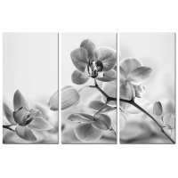 Visual Art Decor Artistic Butterfly Orchid Photo Canvas Printing Flower Canvas Artwork Home Decoration(12x24x3Pcs)