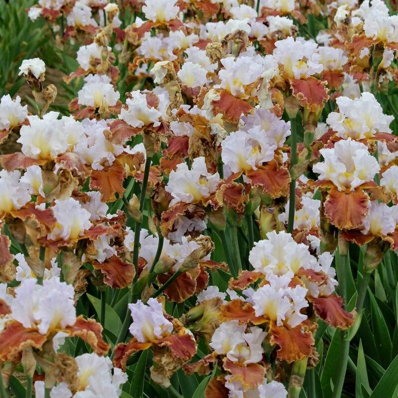 online get cheap tall garden flowers -aliexpress | alibaba group