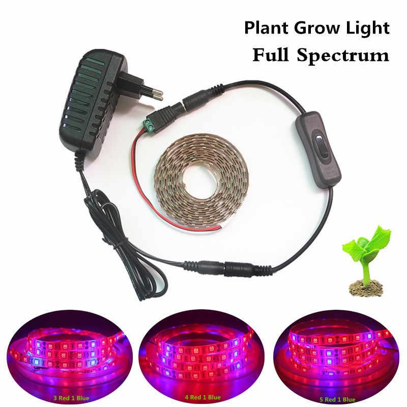 Lampes Phyto LED à spectre complet kit de bande LED 5050 SMD LED lumières de croissance + puissance 12 V + commutateur DC pour installation hydroponique à effet de serre