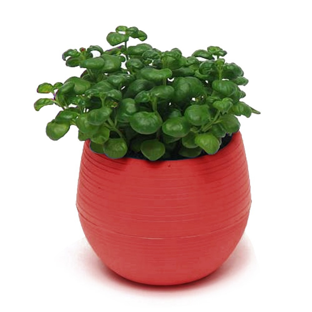 2016 new arrival 7*6.5cm red colourful round plastic plant flower