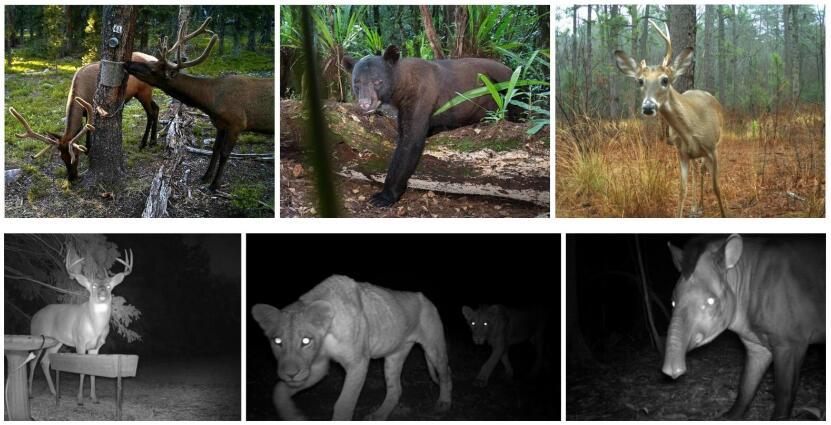 Night Vision Hunting Camera 3
