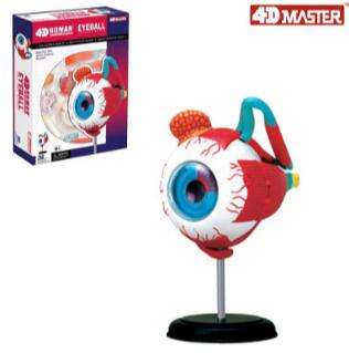 4D eye model 32 parts human anatomy model, new 3D structure of the eye puzzle. robin hood 4d xxray master mighty jaxx jason freeny anatomy cartoon ornament