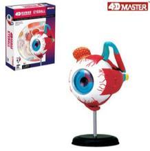 4D eye modelo 32 piezas modelo de Anatomía Humana, nueva estructura 3D del rompecabezas del ojo.