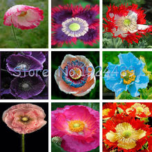 Фотография Beautiful 9 different colors of oriental poppy seed flowers potted bonsai garden courtyard terrace 200PCS