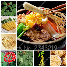 15 Seeds Stratified Chinese hardy Panax Ginseng Korea Ginseng Seeds Herbal Seeds Ginseng Roots Rare Flower Seeds
