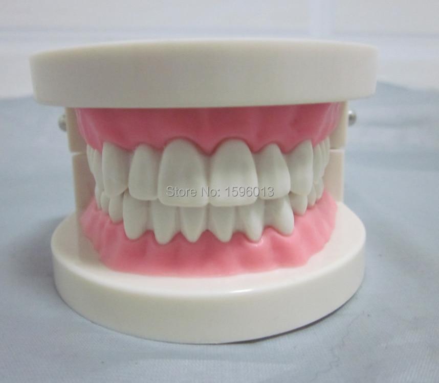 яскравий симулятор стоматологічної допомоги, модель стоматологічного догляду, модель зубів