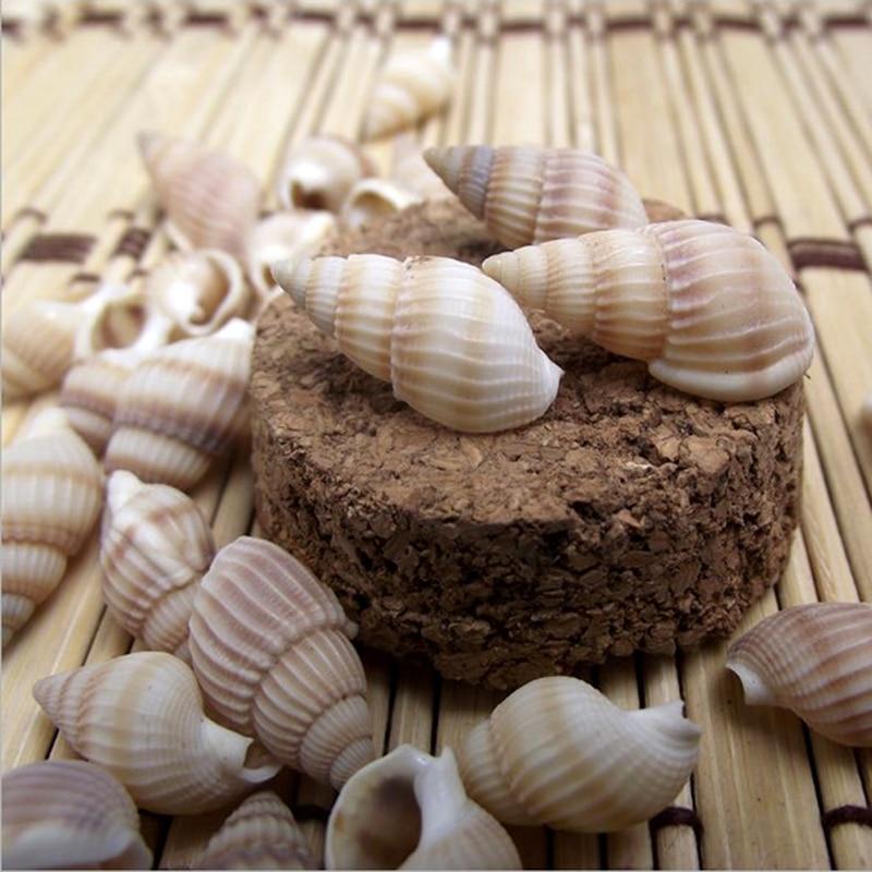 100PCS Shells Starfishes Natural Conch Shells Screw Wall Decoration DIY Aquarium Landscape Seashell For Fish Aquarium Decor