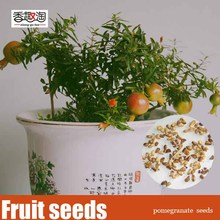 Free shipping 20pcs Pomegranate seeds, Delicious sweet fruit bonsai tree seed