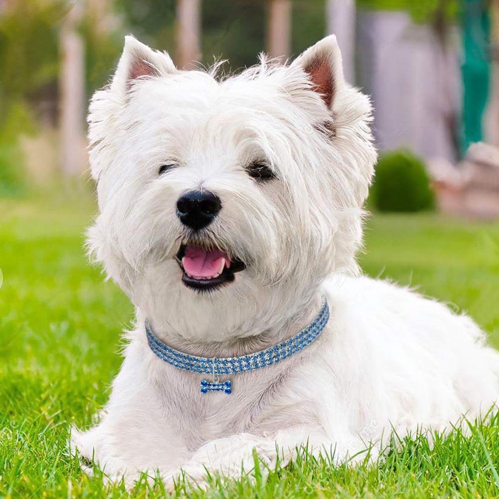 1PCS 3 Rows of Rhinestone Stretch Line Pet Necklaces Dog  2