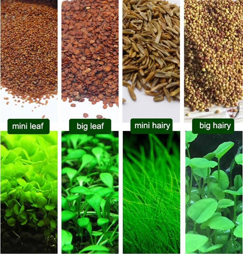 Water Grass Seed Aquarium Aquatic Plants Seeds Easy Planting Fish Tank Landscape Ornament Lawn Decor7