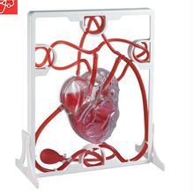 Модель циркуляции крови сердца детские развивающие игрушки обучающие средства кровообращение сердца биологический научный эксперимент