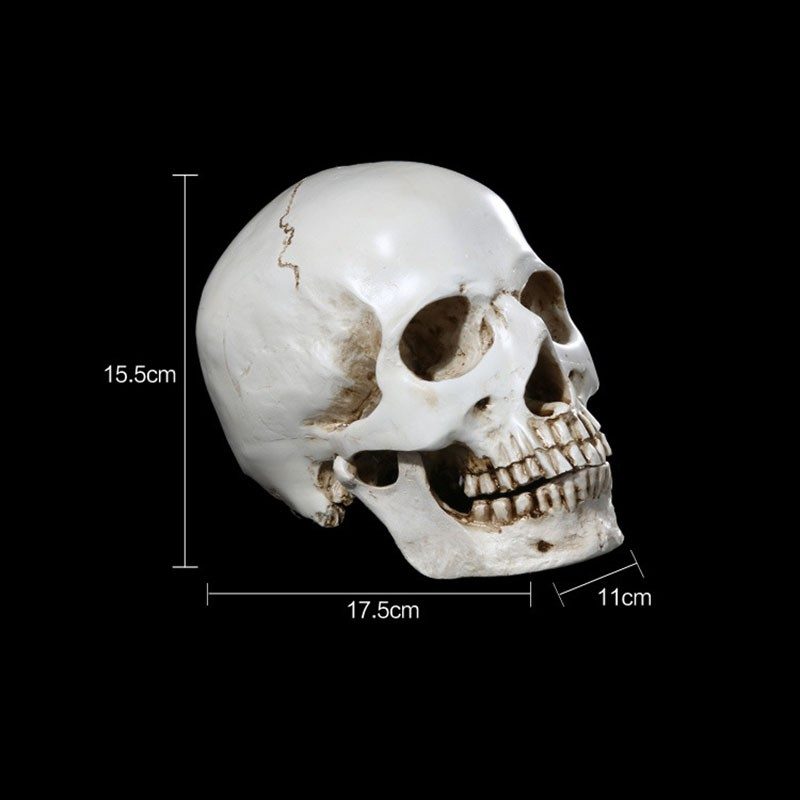 online shop 1pc resin skull statue figurine human shaped skeleton head halloween decor aliexpress mobile - Halloween Skeleton Head