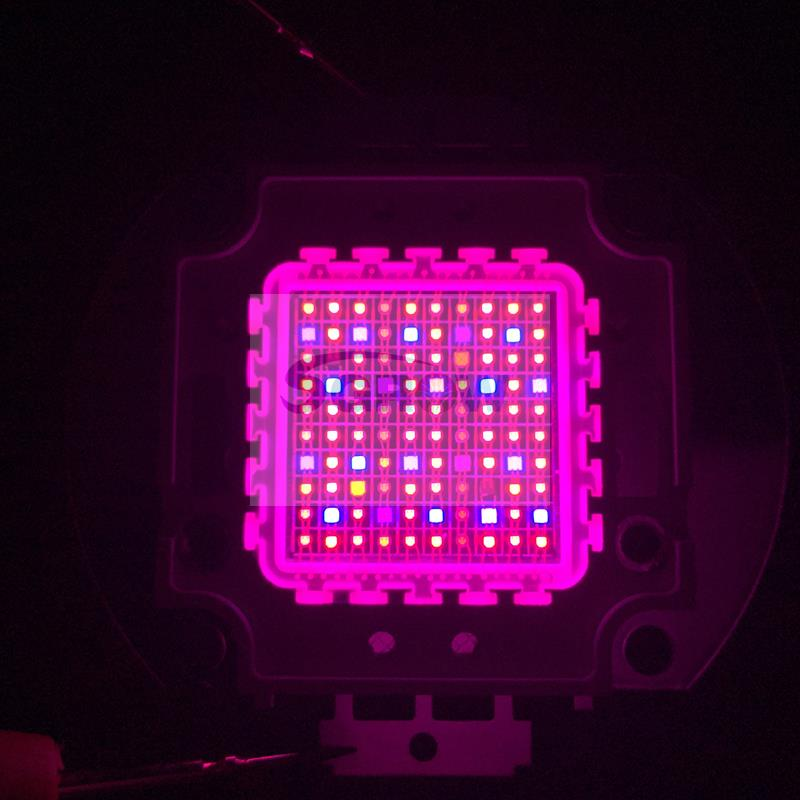 Cob Led Grow Chip Full Spectrum Red Blue Uv Ir White Led Plant Grow Chip 2 Channel Output For Hydroponics 200w Cob Led Cob Led Growled Grow Chip Aliexpress