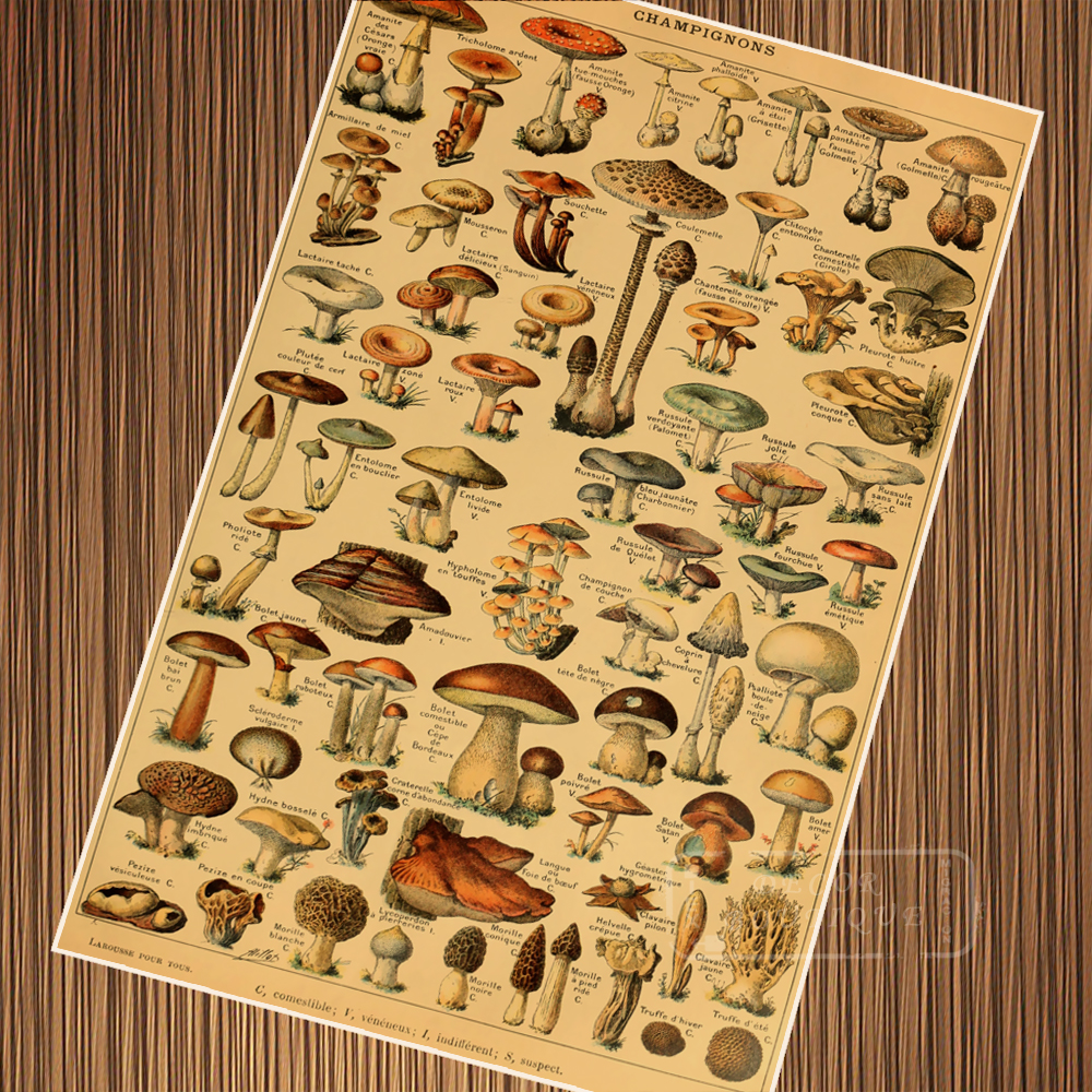 Vintage Insects on Dictionary Retro Poster Canvas Painting DIY Wall ...