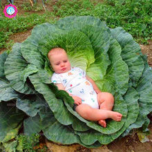 200pcs Rare Giant Russian Cabbage seeds natural organic vegetables plant for home spring farm supplies High germination rate