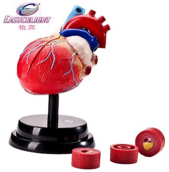 The luxury human organ heart structure anatomical group assembles the model set for the hospital student teaching appliance