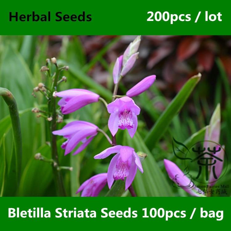 ②Urne fleur d\'orchidée plante bletilla striata orchidaceae bai ji ...