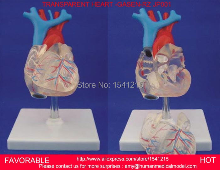 ANATOMICAL MODEL,HUMAN HEART ANATOMICAL MODEL MEDICAL TEACHING AID, HEART MODEL,NATURAL BIG TRANSPARENT HEART -GASEN-RZJP001 anatomic heart model process model medical model of lipid cholesterol age model coronary heart disease thrombosis gasen xz011