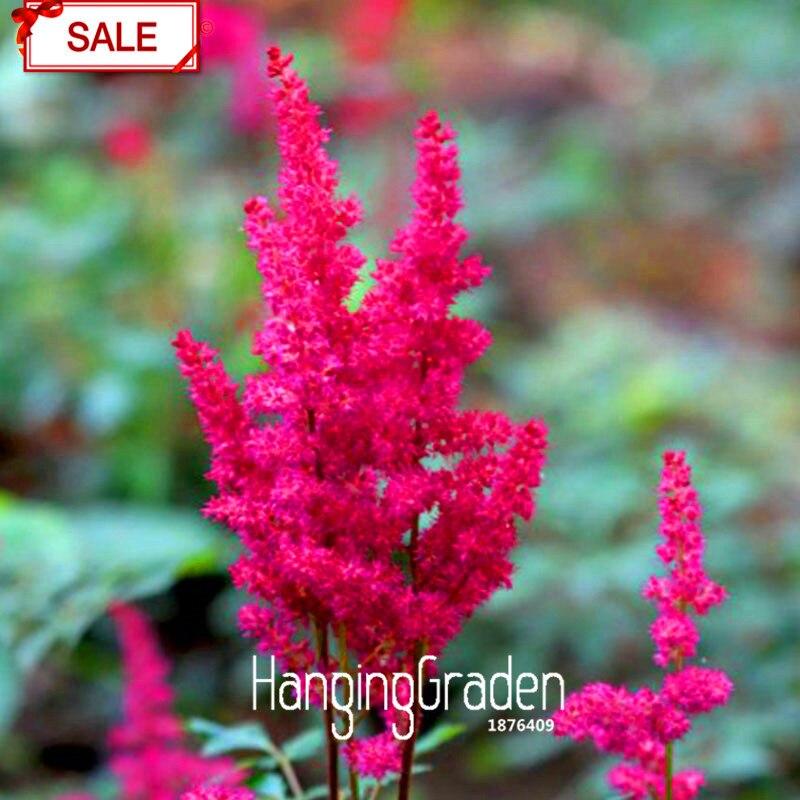 Акция потери! многоцветные астильбе бонсай многолетние цветущие растения горшках сад красивый 100 Флорес/мешок, # L0SAW