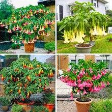 100Pcs/Bag Mandala Bonsai Plants Rare Datura Flower perennial flowers for home Garden Beautiful Potted Plant