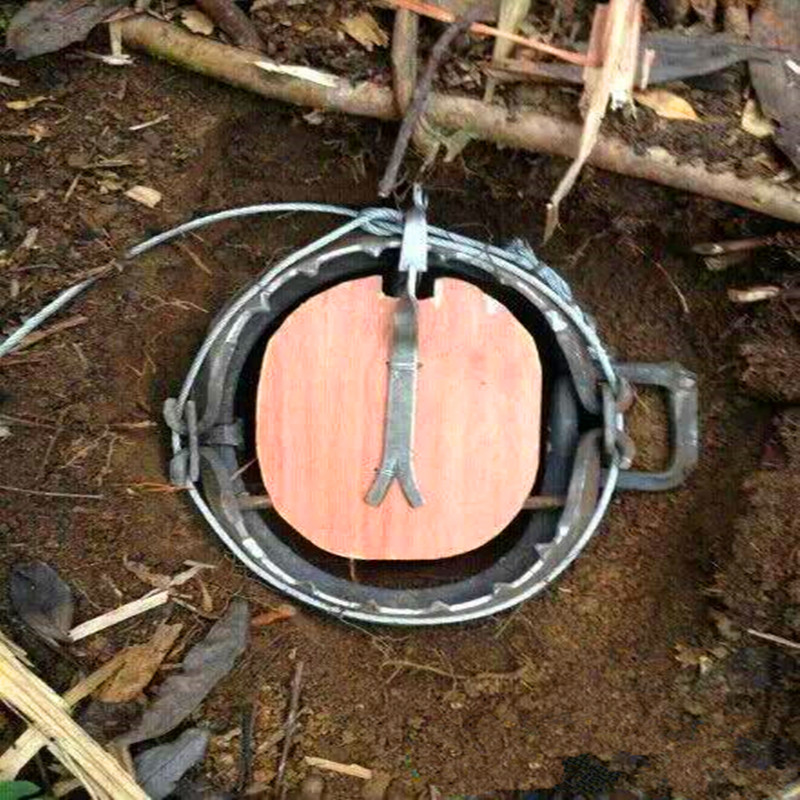 High Quality Leg Hold Animal Trap Wild Boar Trap Sus Scrofa Trap Hunting Trap With Teeth Diameter 140mm 5.5 Inch Model