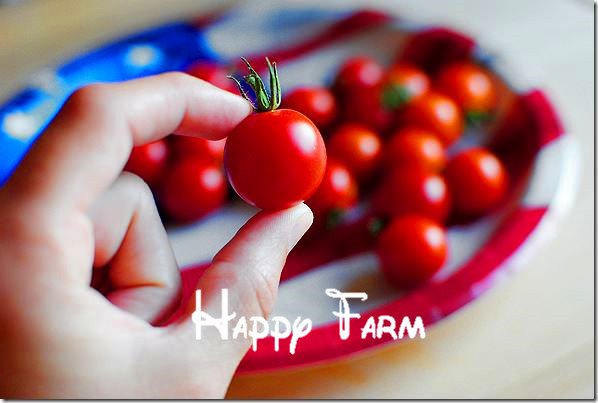 "100+ pieces Rare Climbing Tomato seeds, ""Cherry Tomatoes – sweet 100"", Mini Tomato Bonsai Plant seeds, Organic Food"