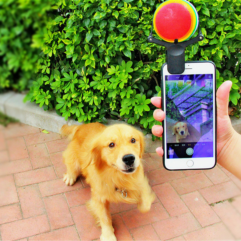 Dog Selfie Stick | Cute Puppy Stuff | Pet Accessories | Dogs Supplies