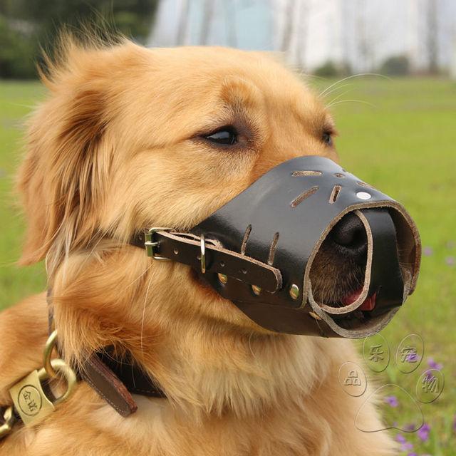 dog mouth guard