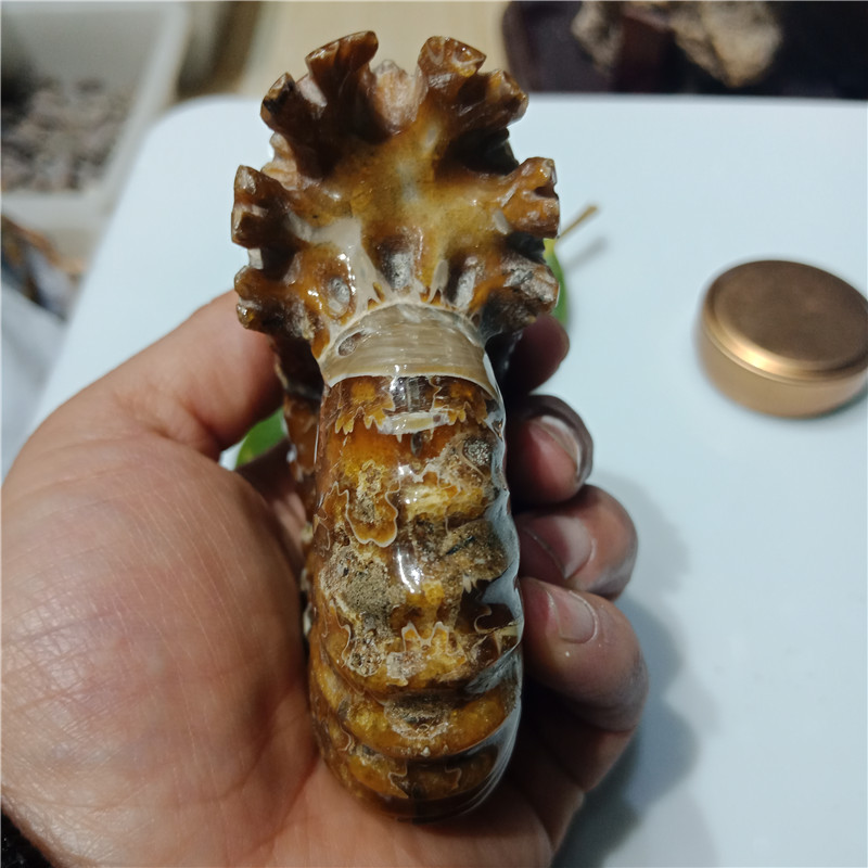 "about 200grams Natural Polished ""Goat Horn"" Fossil Ammonite Conch Douvilleiceras Madagascar Mineral Specimen 8-9cm"